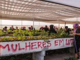 Alvaro Dias questiona providências do governo sobre destruição de pesquisa por membros do MST