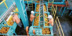 Alvaro Dias apresenta projeto para incentivar a indústria e o comércio do suco produzido no País
