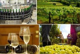 Apelo para que Congresso modifique medida do governo que aumenta impostos dos produtores de vinho