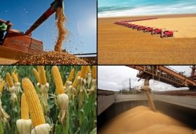 Agricultura brasileira consegue sobreviver e prosperar mesmo com a crise que assola o País