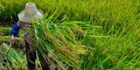 Senador cobra informações sobre grupo de agrobiodiversidade