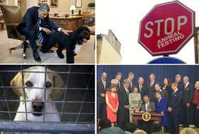 Obama assina medida para reduzir de forma significa os testes com animais