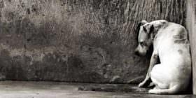 Alvaro Dias garante aprovação de projeto que criminaliza a prática de atos de crueldade contra cães e gatos